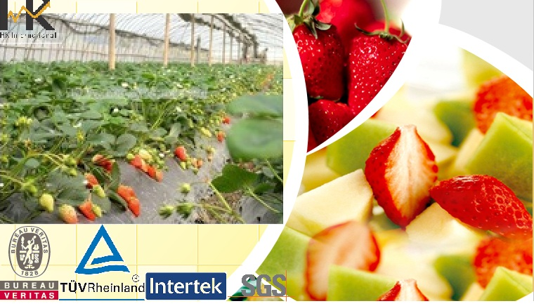 Nonwoven UV Treated Strawberry Cover